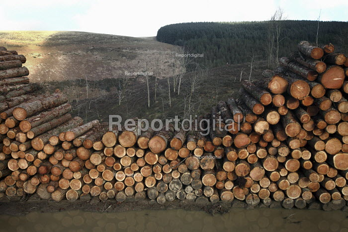 Afan forest, South Wales. Phytophthora ramorum - a devastating fungal pathogen - is causing widespread damage to trees in the UK. Larch log pile. - Paul Box - 2011-02-15