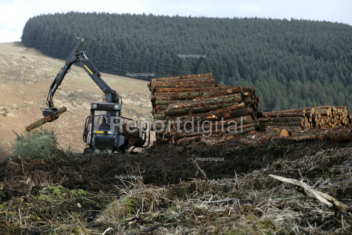 Afan forest, South Wales. Phytophthora ramorum - a devastating fungal pathogen - is causing widespread damage to trees in the UK. A machine stacks Larch logs. - Paul Box - 2011-02-15