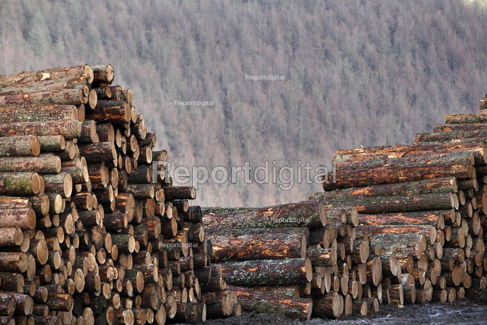 Afan forest, South Wales. Phytophthora ramorum - a devastating fungal pathogen - is causing widespread damage to trees in the UK. Larch logs with a larch forest in the background. - Paul Box - 2011-02-15