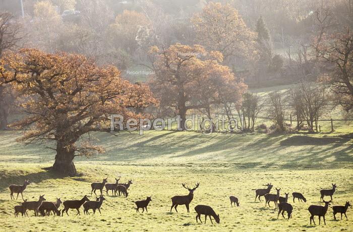 Deer, Ashton Court Estate, Bristol. European Green Capital. - Paul Box - 2014-12-03
