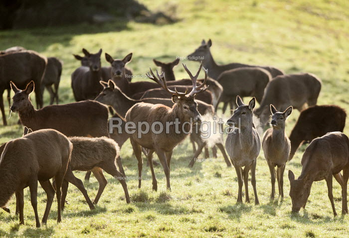 Deer, Ashton Court Estate, Bristol. - Paul Box - 2014-12-03