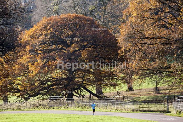 Runner, Ashton Court Estate, Bristol. - Paul Box - 2014-12-03