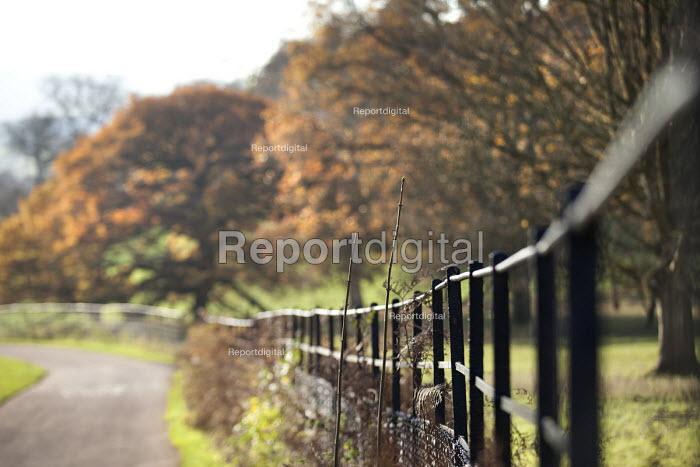 Ashton Court Estate, Bristol. - Paul Box - 2014-12-03