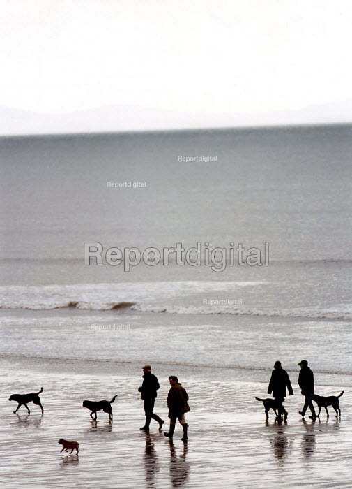 Walkers and dogs, Pendine Beach foreshore, Pembrokeshire. South Wales. - Paul Box - 2002-09-14