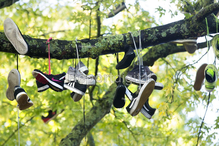 Skateboarders hang there old skate shoes in a tree, College Green, city centre, Bristol. - Paul Box - 2014-10-16