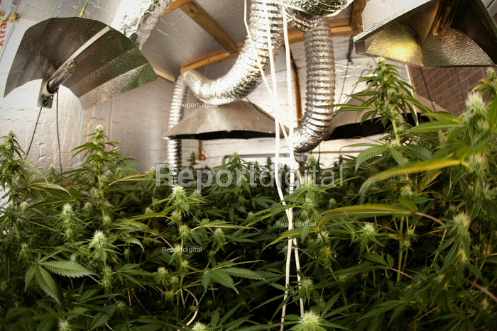 A hydroponic cannabis farm in a home garage, Bristol. - Paul Box - 2010-09-01