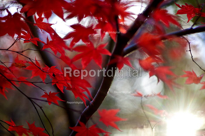 Autumn leaves, Westonbirt Arboretum, Forestry Commission, Wiltshire. - Paul Box - 2012-11-08