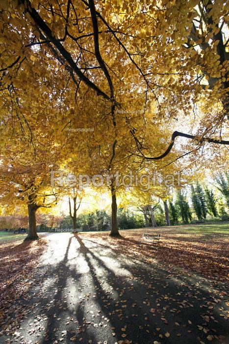 Autumn scene Clifton, Bristol. - Paul Box - 2012-11-11