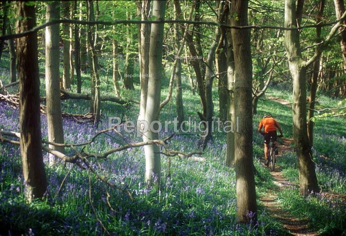 Mountain biker riding through a sunlit bluebell wood. - Paul Box - 2003-05-18