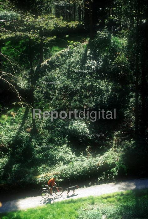 Mountain biker riding through a sunlit wood. - Paul Box - 2003-05-18
