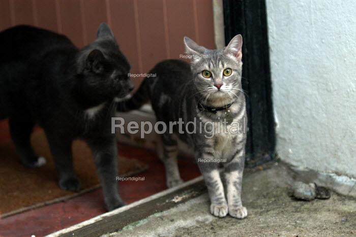 Cats on door step - Paul Box - 2003-03-01