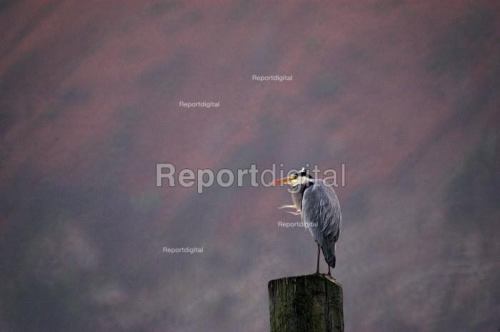 A heron sits on its Perch, Lynmouth, Devon - Paul Box - 2003-11-01