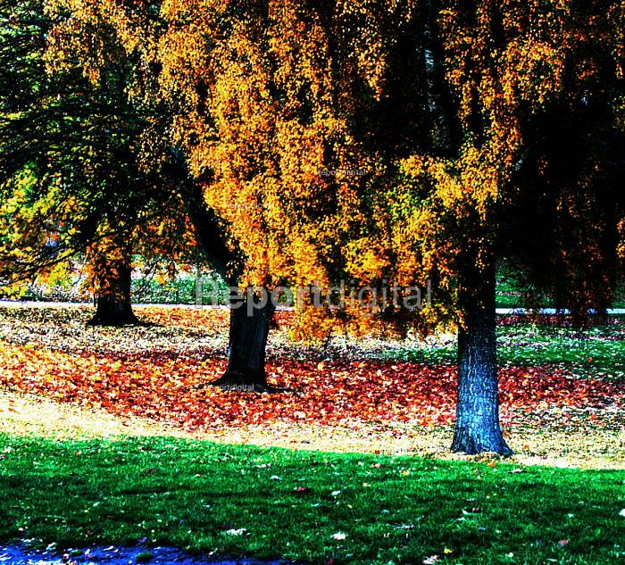 Autumn leaves, abstract. Ashton Court Bristol - Paul Box - 2003-10-01