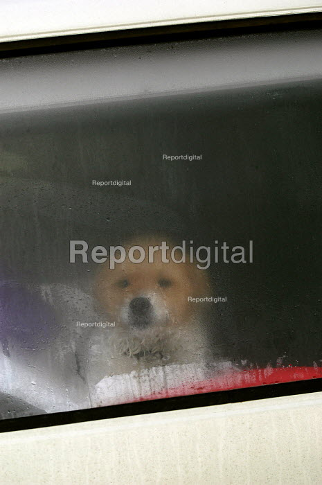 A puppy looks out of the back window of a camper van - Paul Box - 2004-03-02