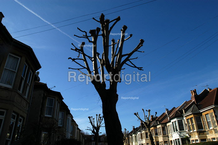 Pruned London plane trees, in a victorian terraced street Bristol - Paul Box - 2004-03-02
