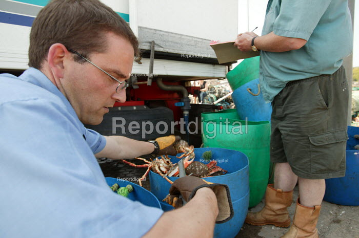 Fisheries officer measuring Spider crabs, Padstow docks, Cornwall The crabs are exported to Spain by lorry - Paul Box - 2004-08-02