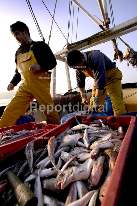 Local fishermen catch fish in the Camel estuary, the catch is exported live to Spain. Padstow. - Paul Box - 2004-08-02