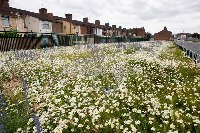 Wild flowers grow on the site of a demolished street next... - Philip Wolmuth, pw090660.jpg