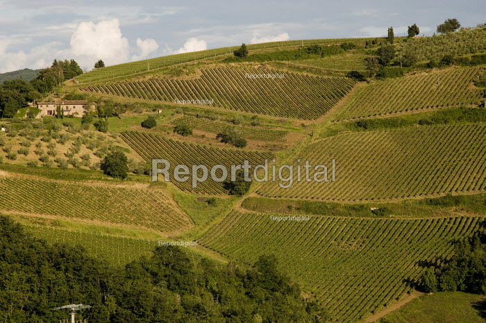 Vineyard on a hillside in the Chianti winemaking region of Tuscany, Italy. - Philip Wolmuth - 2010-06-03
