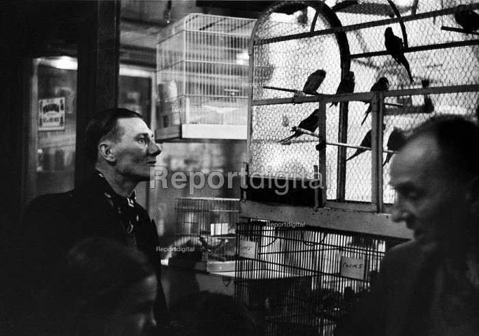 Man looking at caged birds in a pet shop in London in 1952. .... - Elizabeth Chat - 1952-07-11