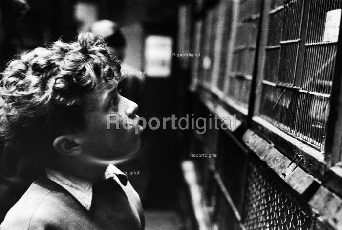 Boy looking at caged pets in a pet shop in London in 1952. .... - Elizabeth Chat - 1952-07-11