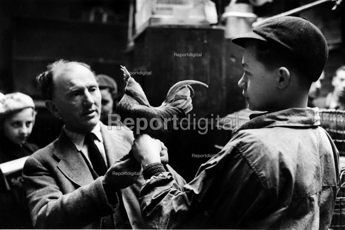 Boy and man conferring over rooster in a pet shop in London n 1952. .... - Elizabeth Chat - 1952-07-11