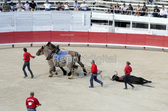 A dead bull is dragged from the ring following a Bullfight in the Roman Amphitheatre in Arles, southern France. - Stefano Cagnoni - 2011-08-08