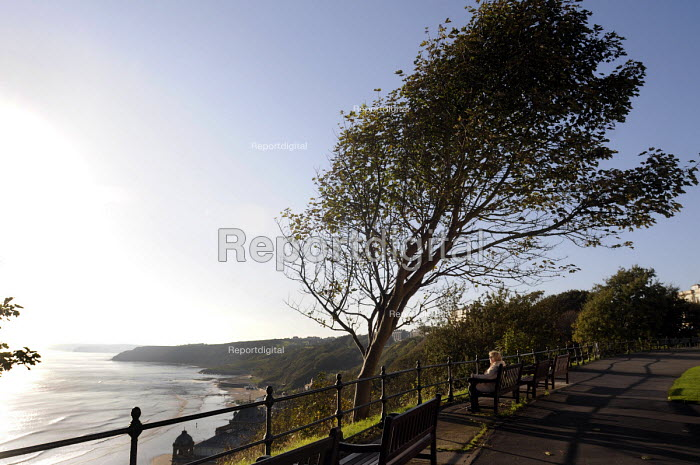 Old woman looking out to sea beneath a windswept tree, early in the morning, Scarborough, 2014. - Stefano Cagnoni - 2014-10-09