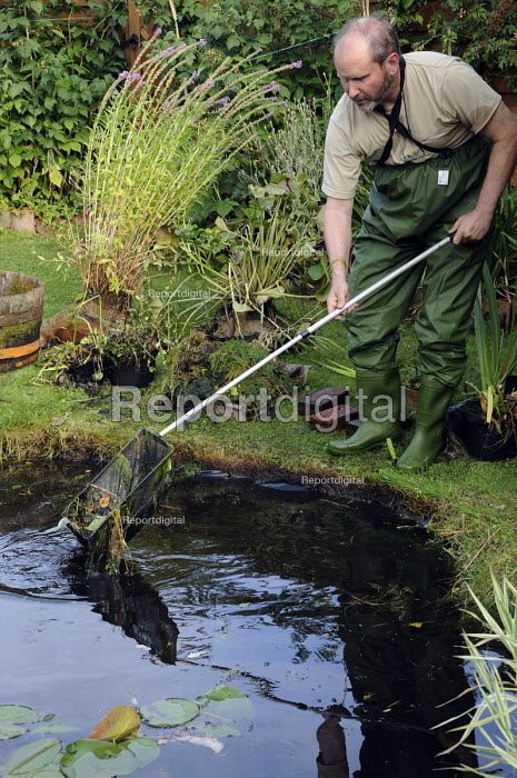 Middle aged man wearing waterproof waders and boots clearing debries and leaves with a fishing net from his garden pond. - Janina Struk - 2009-09-07