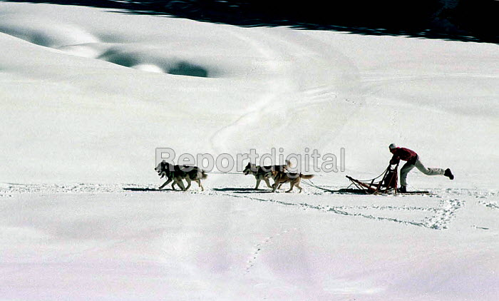 The Yugoslav sled dog Champion, training with his Husky dogs. Serbia 2004 - Andrija Ilic - 2004-05-21