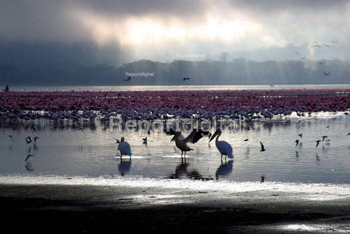 Stork and flamingos at Lake Nakuru National Park, Kenya 2004 - Boris Heger - 2004-09-01