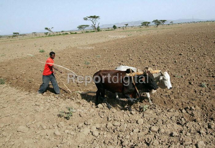 A farmer ploughs his field in rural Somalia. 2005 - Boris Heger - 2005-09-06