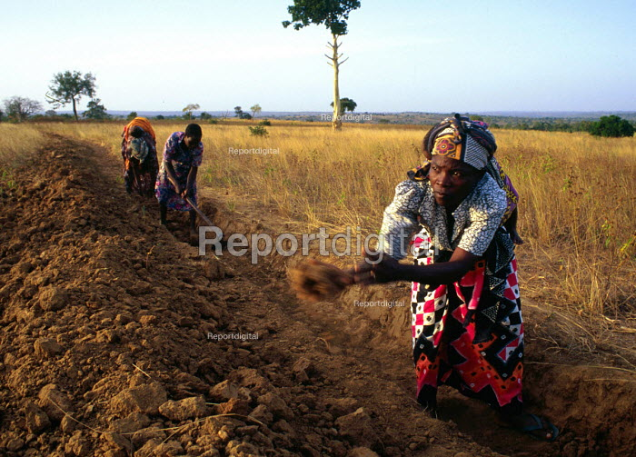 Women working on a development project to increase the productivity of their fields. Mombasa District, Kenya. 2000 - Howard Davies - 2000-05-03