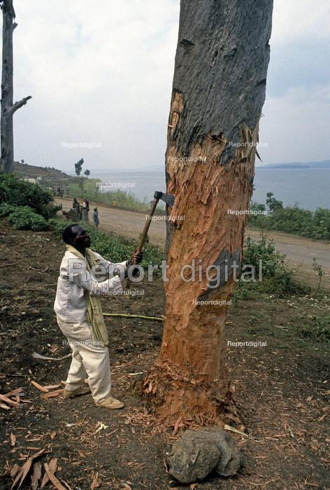 Rwandan Hutu refugee collects firewood near Bukavu, Zaire - Congo 1994 - Howard Davies - 1994-05-03