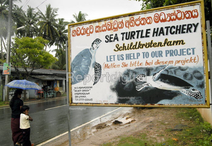 A sea turtle hatchery on the south coast of Sri Lanka. The turtle eggs are hatched in a protected environment before the young are released after a few days. Sri Lanka 2007 - Howard Davies - 2007-10-21