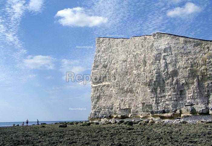 Chalk cliffs on the south coast of England. UK 2007 - Howard Davies - 2007-08-05