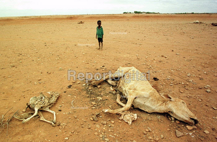 A boy stands close to the carcasses of animals during the worst famine and drought in two decades. Gode, Ethiopia. 2000 - R. Chalasani - 2000-04-30