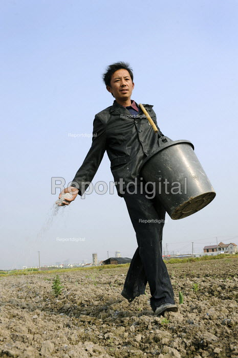 A farmer spreading fertiliser by hand in a field on the outskirts of Shanghai, China - Timm Sonnenschein - 2009-04-17