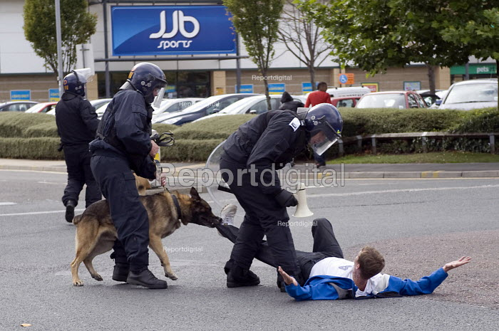 An EDL protester lying in the street being bitten by a police dog. - Timm Sonnenschein - 2010-08-28