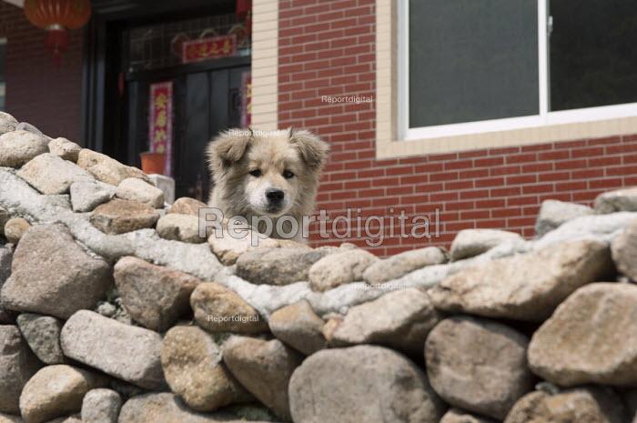 A young pet dog, Moganshan, China - Timm Sonnenschein - 2014-04-15