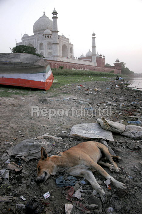 The Taj Mahal, Agra, India, the famous mausoleum is being damaged by pollution from the Yamuna River - Tashi Tobgyal - 2007-11-28