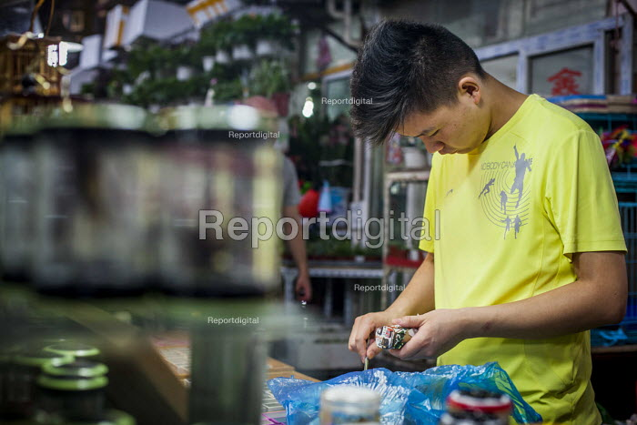 Workers, Pet Market, Shanghai, China. - Connor Matheson - 2015-09-03