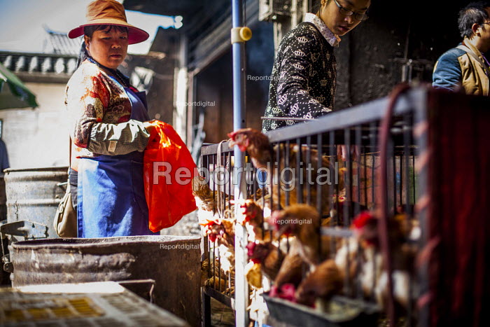 Food for sale in a local market. Dali, Yunnan Province, China. - Connor Matheson - 2015-09-17