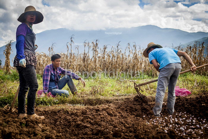 Farmworkers digging a field by hand. Dali, Yunnan Province, China. - Connor Matheson - 2015-09-18
