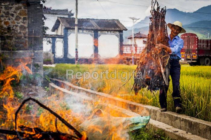 Farmworker burning waste in a rice field. Dali, Yunnan Province, China. - Connor Matheson - 2015-09-18