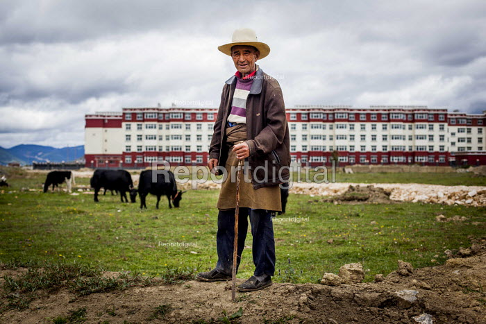 An elderly man looking after his Yacks near a block of flats where most farmworkers live. Shangri La, Yunnan Province, China. - Connor Matheson - 2015-09-24