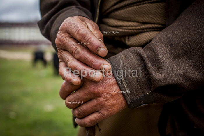 The hands of an elderly man looking after his Yacks, Shangri-La, Yunnan Province, China. - Connor Matheson - 2015-09-24