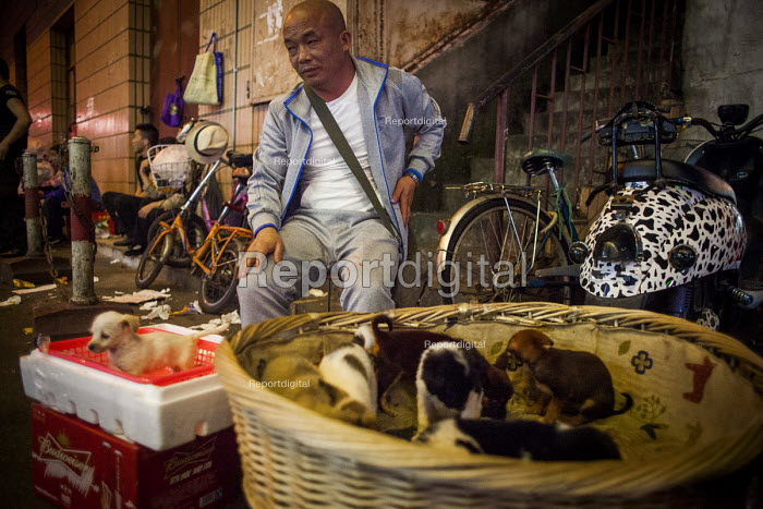 Puppies for sale to wealthy Chinese party goers, Kundu, Kunmings, nightlife district. Kunming, China. - Connor Matheson - 2015-09-26