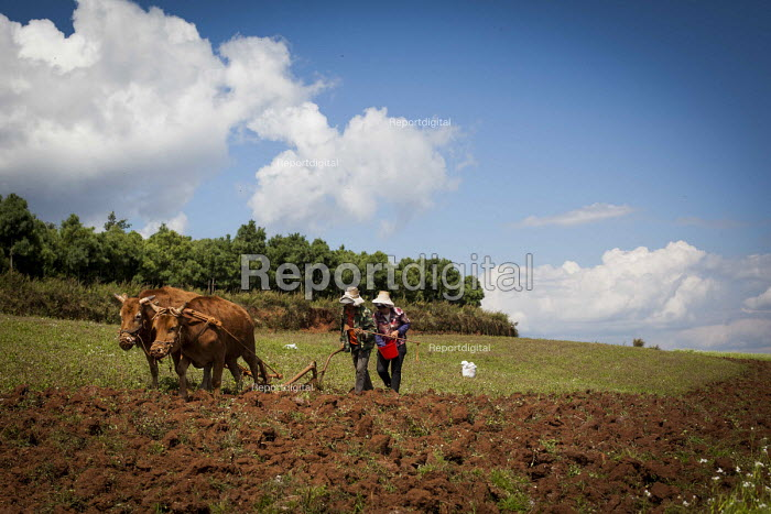 Farmworkers ploughing a field with oxen. Dongchuan Red Land, Yunnan Province, China. - Connor Matheson - 2015-09-29