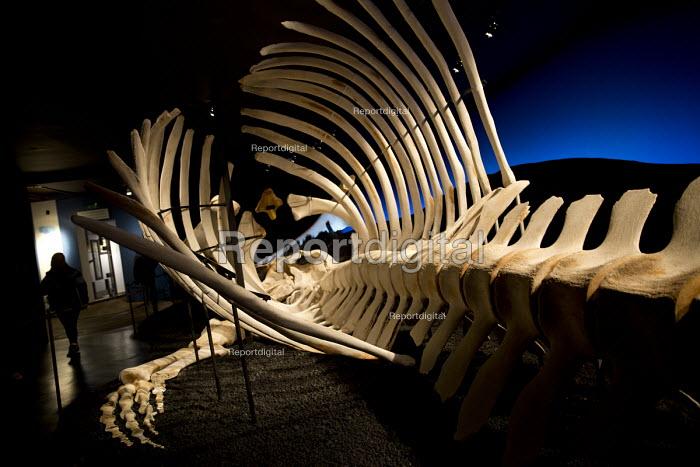 Blue Whale skeleton, Husavik Whale Museum, Husavik, Iceland - Jess Hurd - 2016-05-08